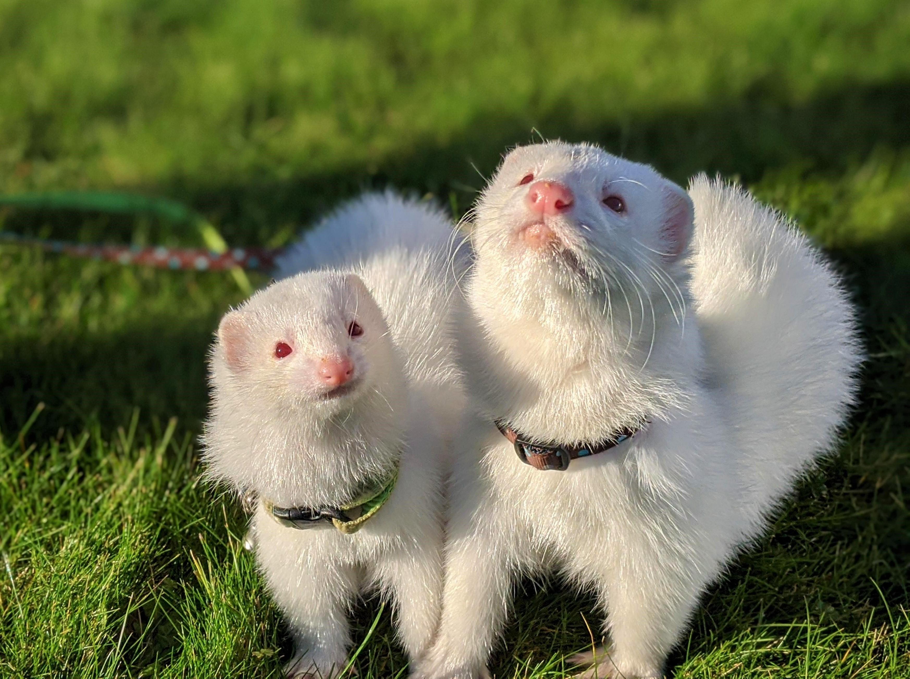 pet profile slider image